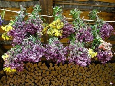 Использование лекарственных трав в бане
