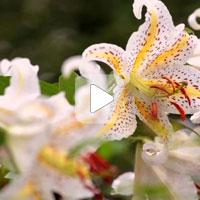 Природа говорит – Цветок