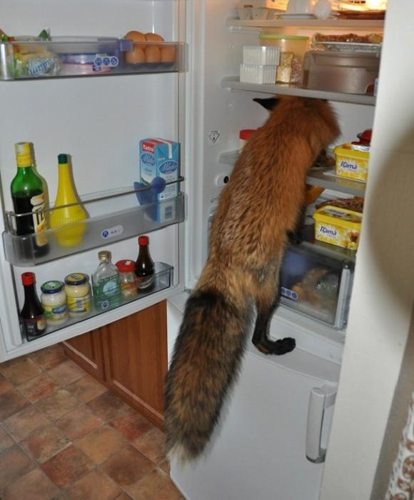 животные,доброта,лиса,спас лису