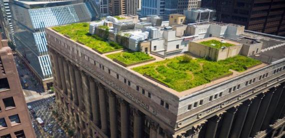 Обязательные зеленые крыши в Копенгагене