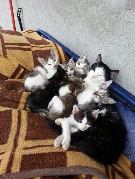 Довольные семейной жизнью кошки с маленькими котятами