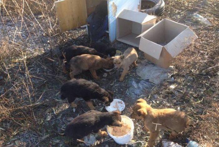 В Анапе кот кормил брошенных щенков мышами