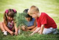 В 2017 году, в год зкологии, каждому ребенку в РФ будет подарен и высажен саженец кедра