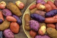 Сорта картофеля. Особенности. УходСорта картофеля. Особенности. Уход