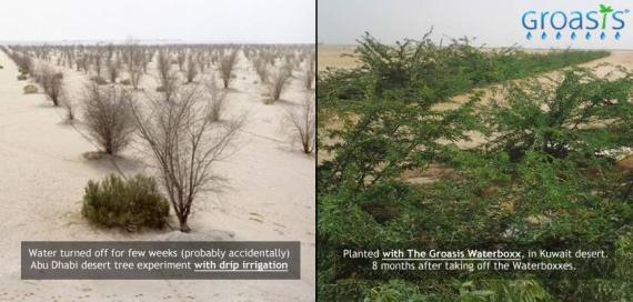 Waterboxx - новая система для восстановления лесов в засушливых районах