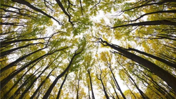 Живые деревья. 5 подтверждений того, что деревья умеют думать