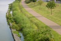 Искусственные болота, как система очистки сточных вод