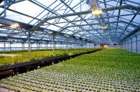 Крупнейшая в мире ферма на крыше производит 10-миллионный урожай без пестицидов