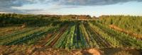 Как леса могут повысить урожайность вашей фермы. Синтропия Эрнста Готча (+Видео)