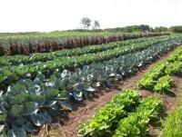 7 советов как получать высокий урожай без использования химикатов от Николая Опары