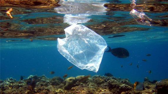 Pînă în anul 2050, în ocean ar putea fi mai mult gunoi decît pește