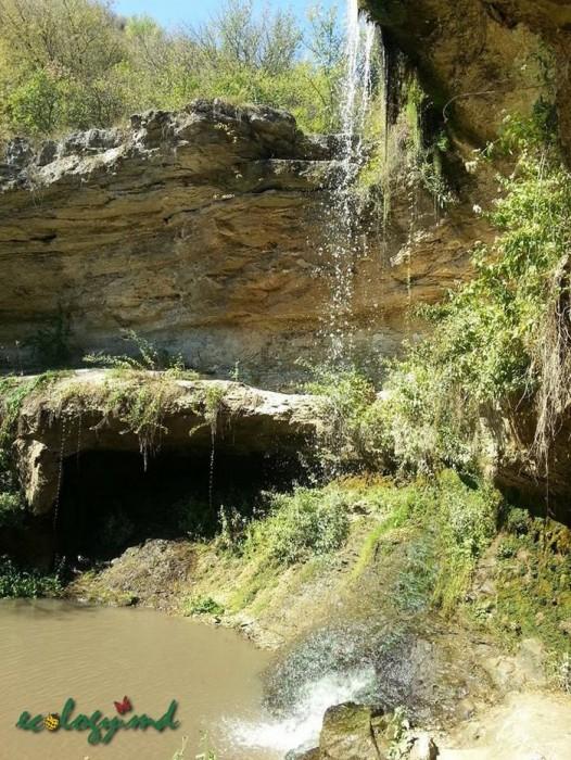 Экологический « клич»  ко всем тем,  кому не безразлична судьба нашего красивого края - Молдовы!
