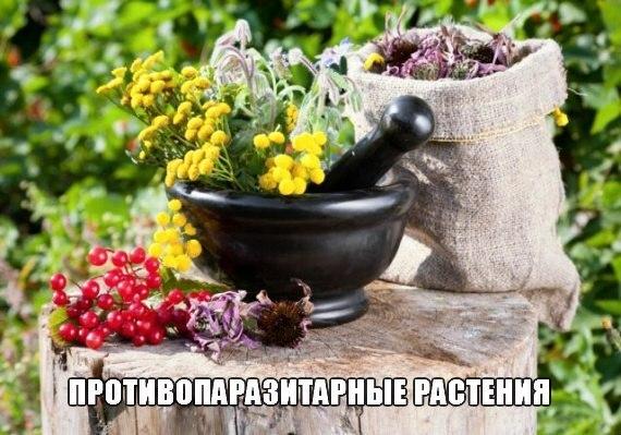 Растения против паразитов и грибов
