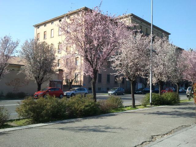 Весна в Италии.  Для тех,  кому немного мало весны – фотоотчет