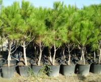 Как бесплатно посадить лес