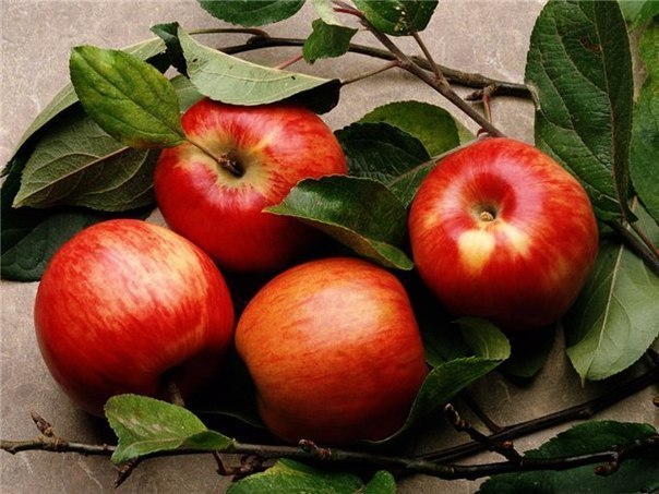 Молодильные яблоки профессора Вигорова