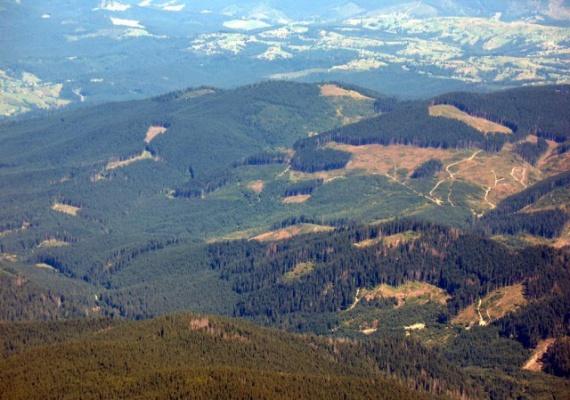 На Прикарпатті зросли площі вирубки лісів