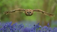 Польза совы для природного сообщества