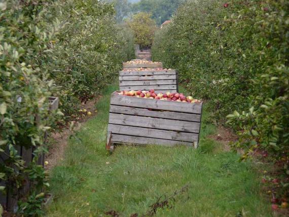 Agricultura organică ar putea hrăni toată lumea. Un nou studiu