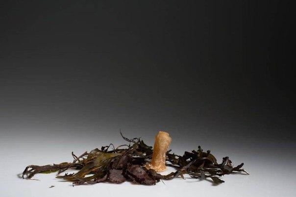 Как водоросли стали материалом для создания биоразлагаемых бутылок