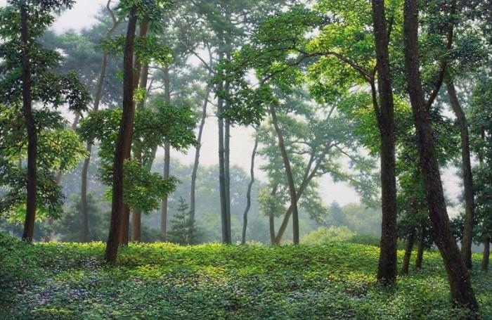 Думаешь, он просто фотографирует лес? Приглядись, это не то, что тебе кажется