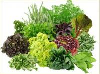 Majoritatea oamenilor nu percep verdeața drept o mîncare separată, considerînd că verdeața este mîncarea exclusivă pentru iepuri. Însă puțini dintre ei cunosc valoarea nutritivă a verdeții și că aceasta depășește de cîteva ori valoarea nutritivă a diferitor rădăcini și legume.