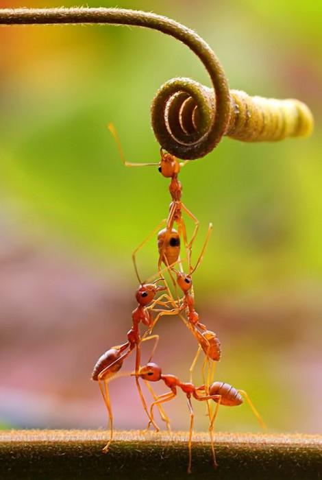 Как избавиться от муравьев с помощью натуральных ингредиентов?