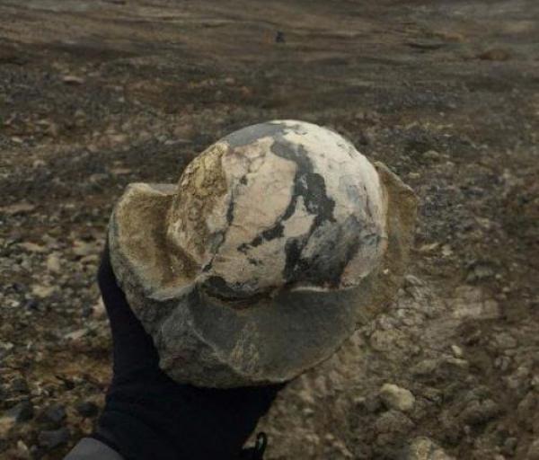 В Антарктиде обнаружены останки динозавров