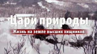 Цари природы: Жизнь на земле высших хищников (Видео)