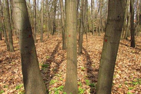 Кабмин Украины запретил санитарную вырубку лесов