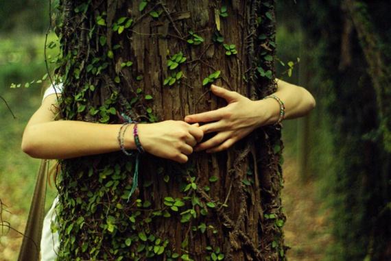 13 причин по-настоящему любить деревья