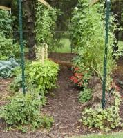 Paiele sînt ideale pentru creșterea legumelor. Acestea absorb foarte bine și mențin umiditatea, asigurînd, totodată, accesul aerului spre rădăcini. În același timp, putrezind, paiele asigură plantele cu cele necesare pentru creștere.