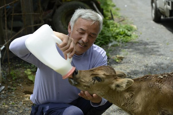 Этот японец вернулся в зараженную зону Фукусимы, чтобы кормить брошенных там животных (+Фото)