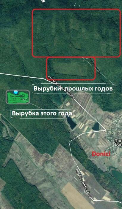 Молдавский лес уничтожают, несмотря на все программы и меры его защиты