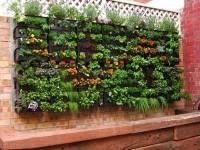 Idei pentru grădina ta