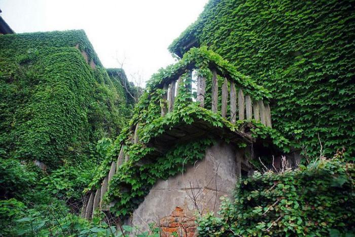 Деревня, поглощенная природой. Впечатляющий ленд-арт в Китае