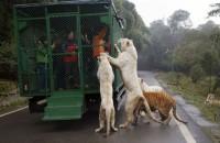 Правильный зоопарк открылся в Китае