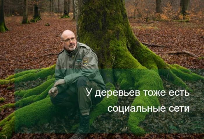"""Pădurarul din Germania Peter Wohlleben, autorul controversatei cărți """"Viața secretă a copacilor"""", a povestit despre viața socială a copacilor."""