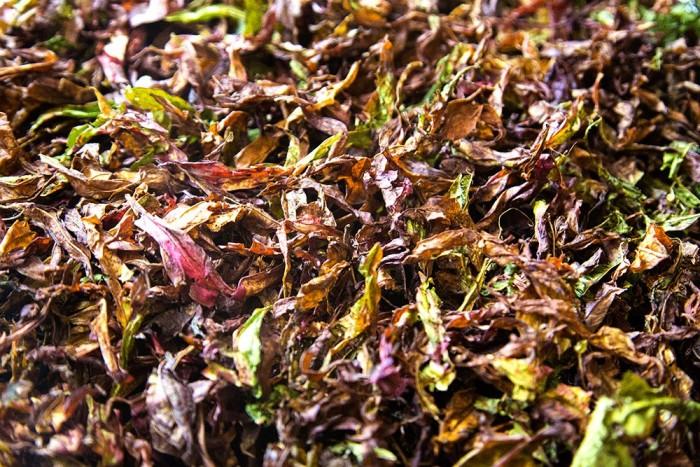 Mulţi cred că sezonul de colectare a plantei Ivan ceai s-a încheiat. Eu nu cred şi continuu să culeg şi voi culege frunze pînă toamna tîrziu, experimentînd şi descoperind noi laturi ale acestei plante minunate.