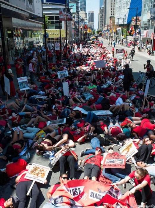 В Торонто прошёл марш за закрытие скотобоен