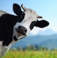 Fabrica de lapte Elmhurst Dairy, cu o istorie de 80 de ani, se va închide luna viitoare, din cauza căderii cererii.