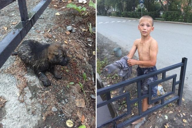 В Ревде 12-летний мальчик нырнул в сточную канаву за щенком