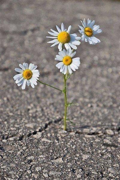 Живи, даже если другим кажется, что это невозможно