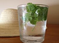 Почему я добавляю кинзу в стакан с водой каждый день. Этот трюк может буквально сэкономить вам уйму денежных средств