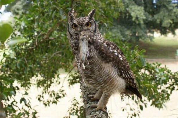 Интернет облетела история о заботливой сове (+Фото)