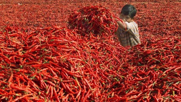 Как собирают урожай и встречают осень в разных странах мира...