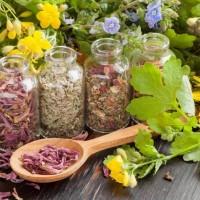 Лучшие противопаразитарные растения — это необходимо знать