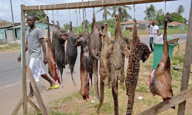 Люди пожирают животных планеты до полного уничтожения