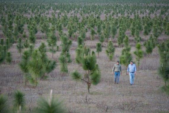 5 людей, которые сотворили лес
