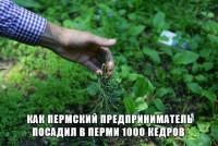Как пермский предприниматель по собственной инициативе и на свои деньги посадил в Перми 1000 кедров